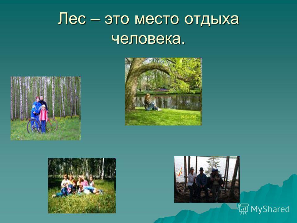 Лес – это место отдыха человека.