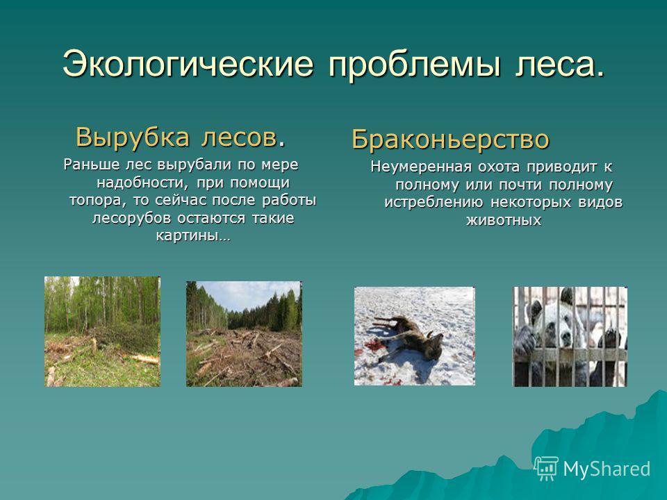 Экологические проблемы леса. Вырубка лесов. Раньше лес вырубали по мере надобности, при помощи топора, то сейчас после работы лесорубов остаются такие картины… Браконьерство Неумеренная охота приводит к полному или почти полному истреблению некоторых