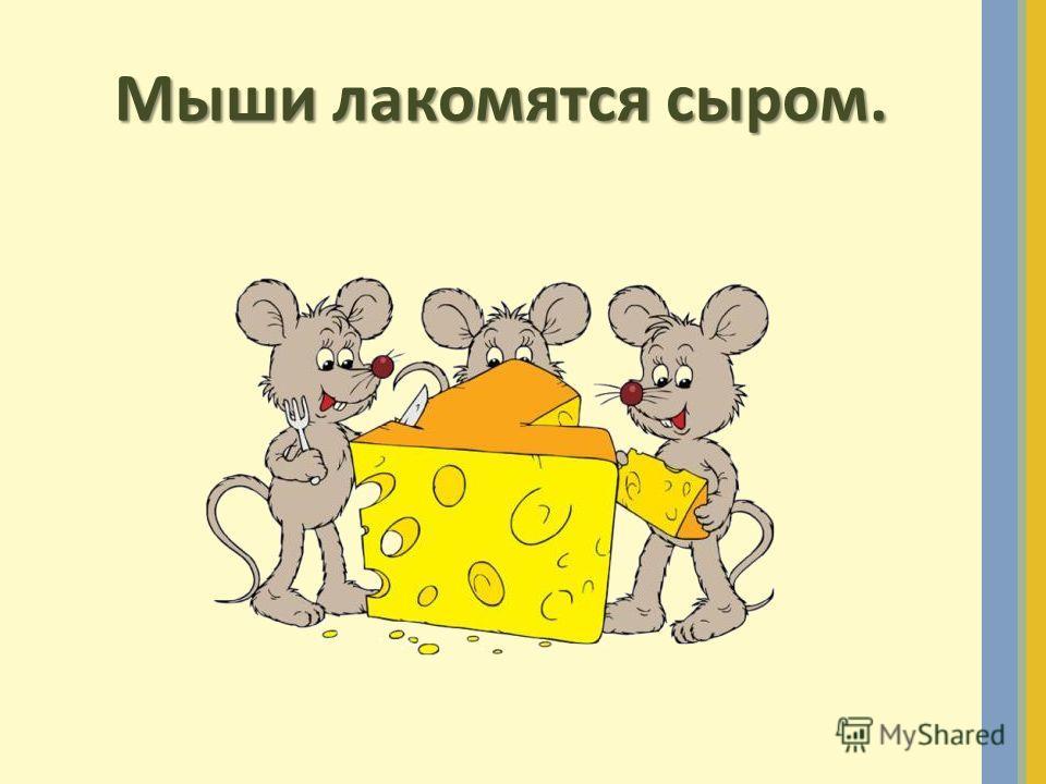 Мыши лакомятся сыром.