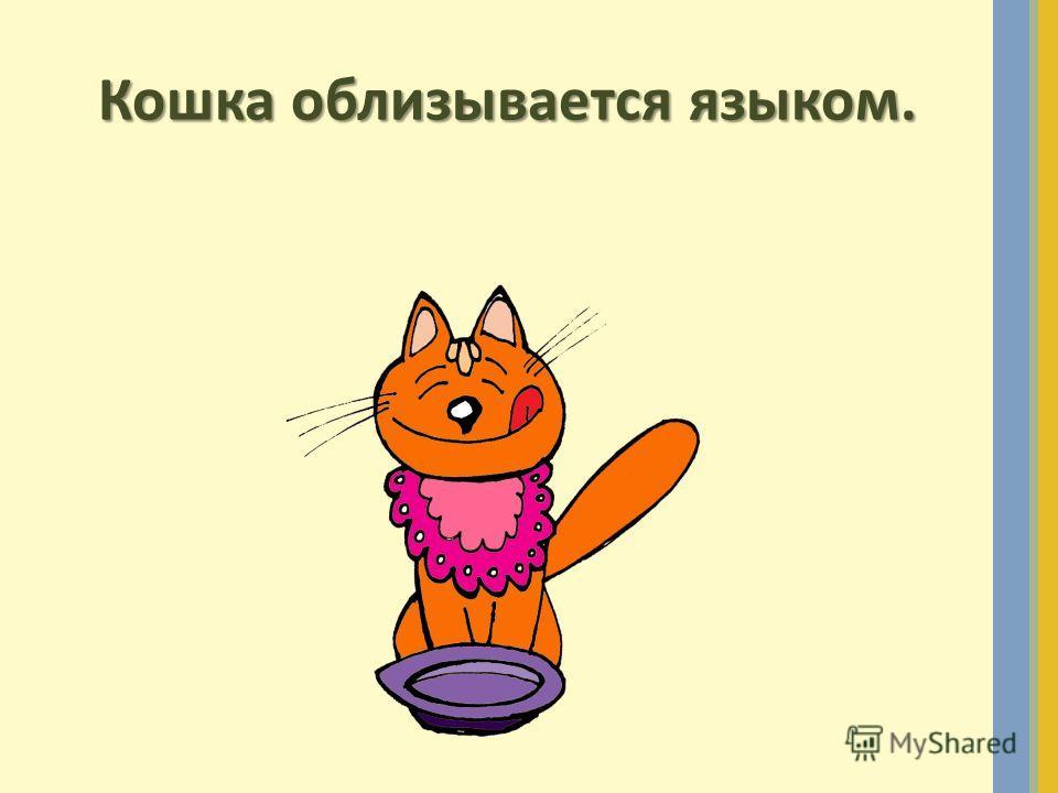 Кошка облизывается языком.