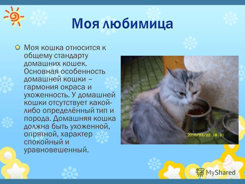 Моя кошка относится к общему стандарту домашних кошек. Основная особенность домашней кошки – гармония окраса и ухоженность. У домашней кошки отсутствует какой- либо определённый тип и порода. Домашняя кошка должна быть ухоженной, опрятной, характер с