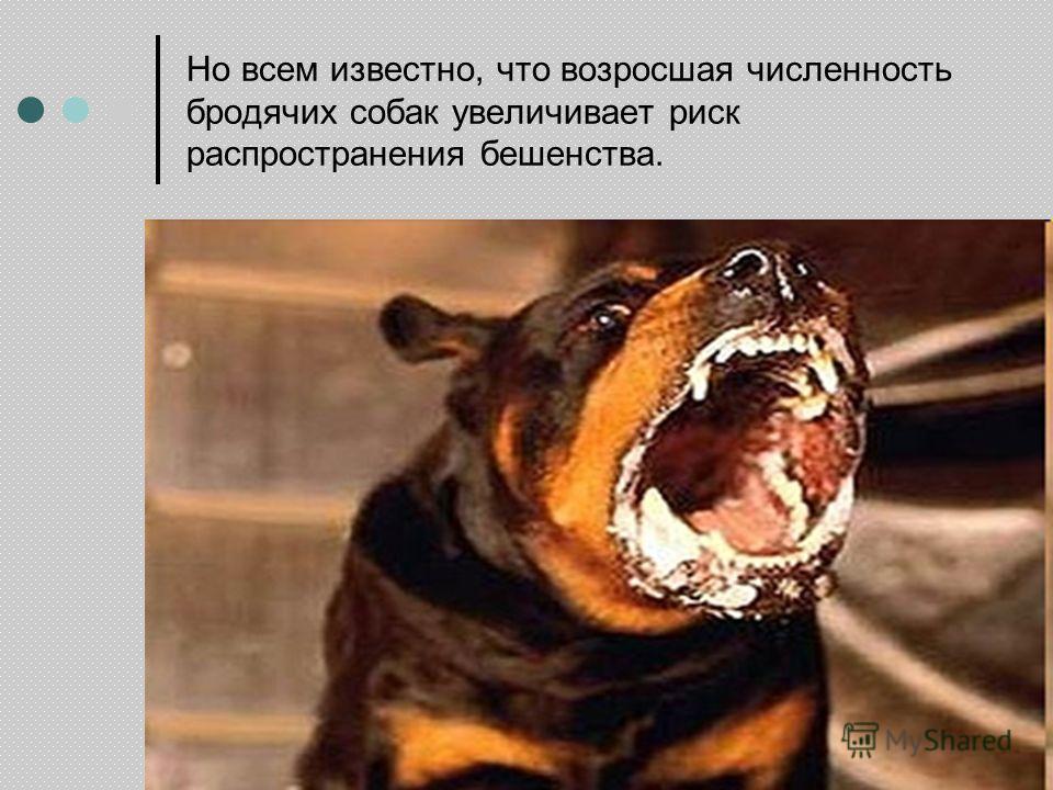 Но всем известно, что возросшая численность бродячих собак увеличивает риск распространения бешенства.