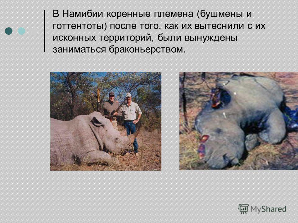 В Намибии коренные племена (бушмены и готтентоты) после того, как их вытеснили с их исконных территорий, были вынуждены заниматься браконьерством.