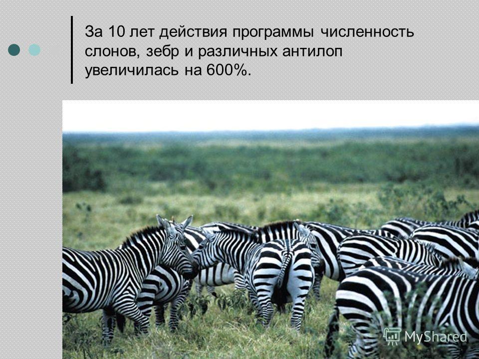 За 10 лет действия программы численность слонов, зебр и различных антилоп увеличилась на 600%.