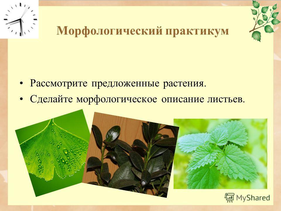 Морфологический практикум Рассмотрите предложенные растения. Сделайте морфологическое описание листьев.