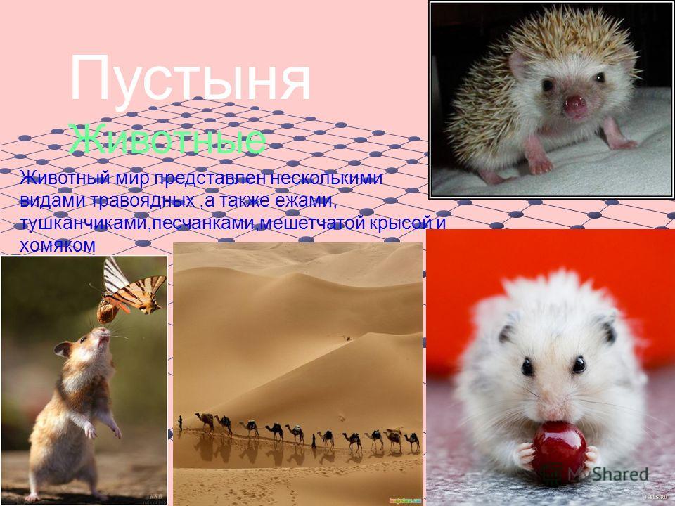 Пустыня Животные Животный мир представлен несколькими видами травоядных,а также ежами, тушканчиками,песчанками,мешетчатой крысой и хомяком