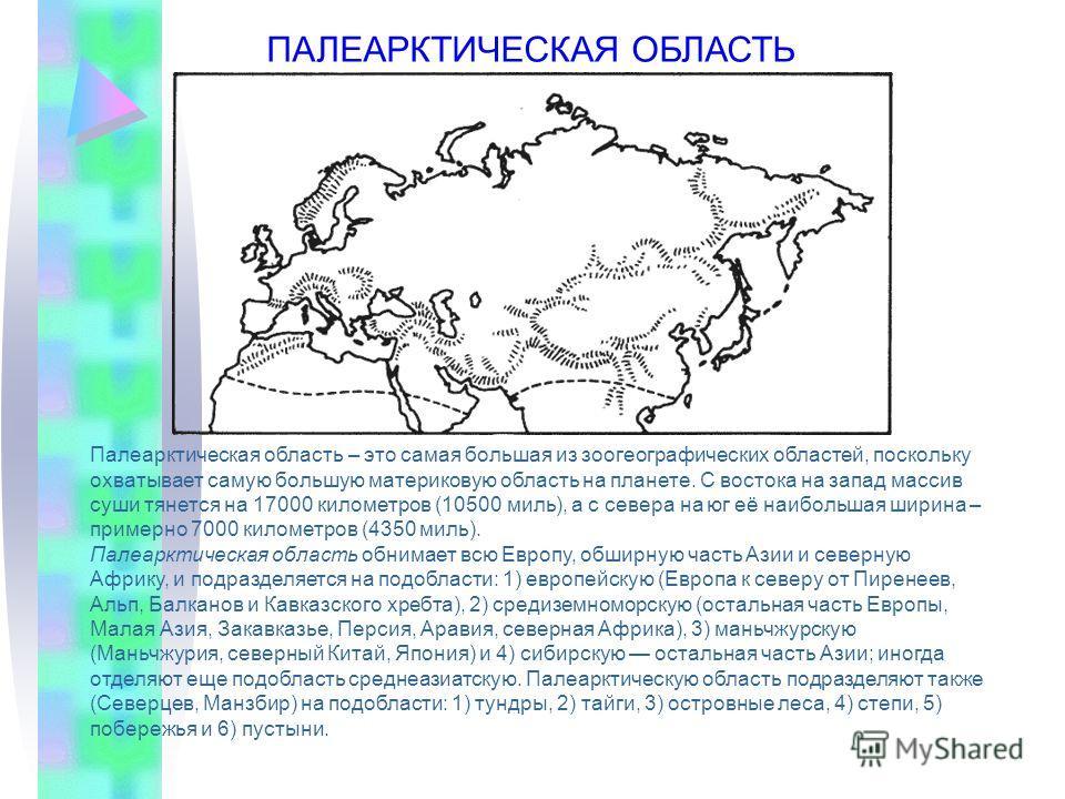 Палеарктическая область – это самая большая из зоогеографических областей, поскольку охватывает самую большую материковую область на планете. С востока на запад массив суши тянется на 17000 километров (10500 миль), а с севера на юг её наибольшая шири