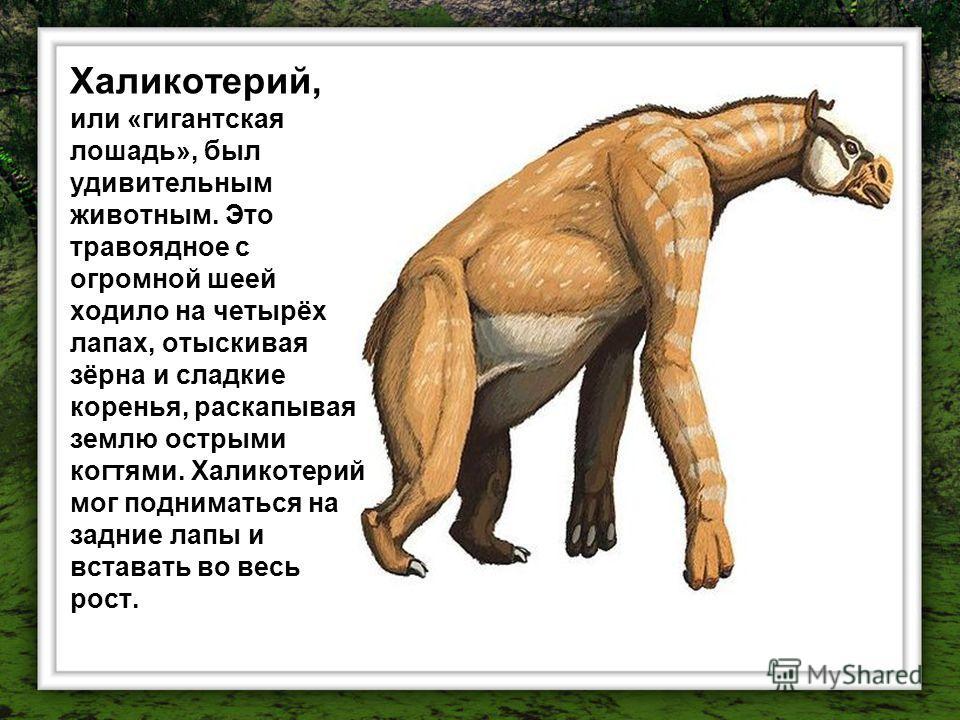 Халикотерий, или «гигантская лошадь», был удивительным животным. Это травоядное с огромной шеей ходило на четырёх лапах, отыскивая зёрна и сладкие коренья, раскапывая землю острыми когтями. Халикотерий мог подниматься на задние лапы и вставать во вес