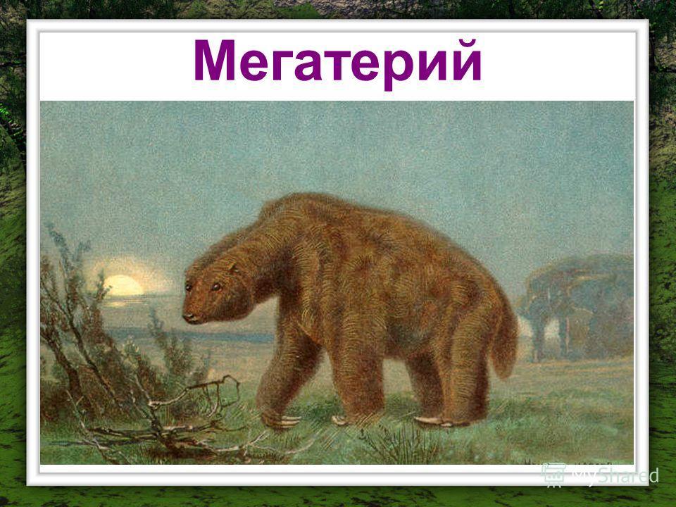 Мегатерий
