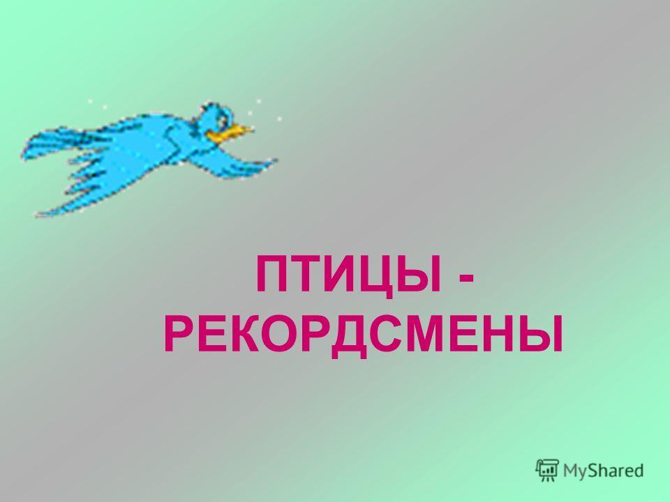 ПТИЦЫ - РЕКОРДСМЕНЫ