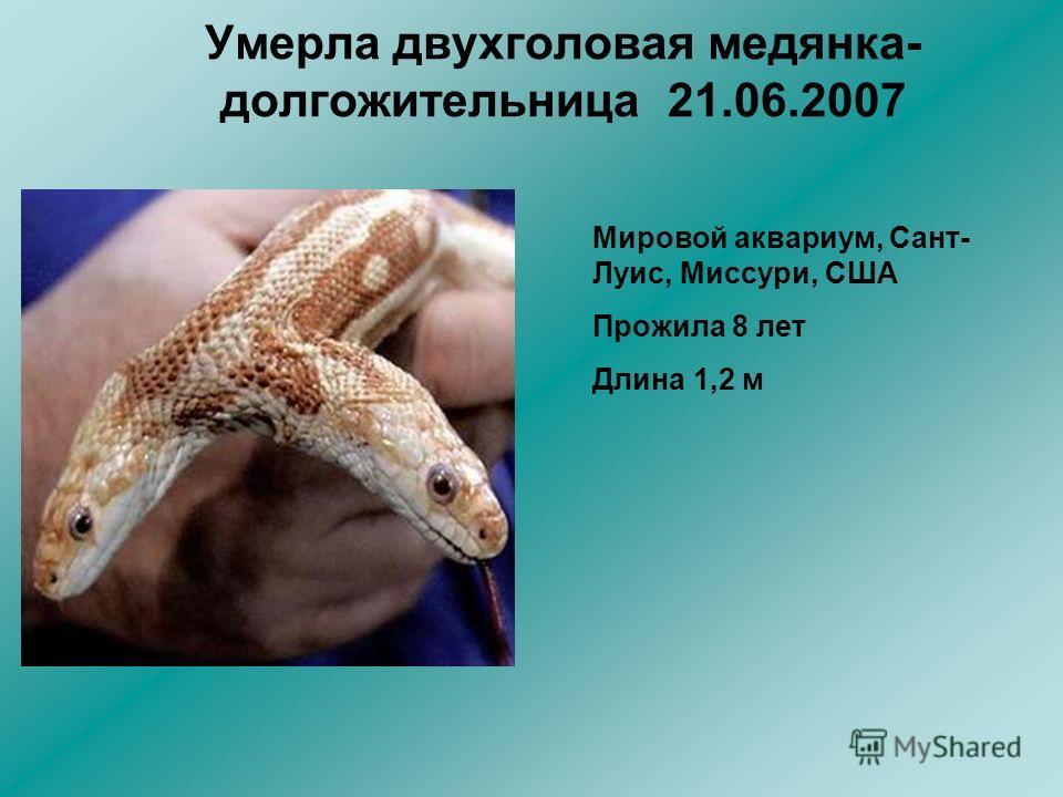 Умерла двухголовая медянка- долгожительница 21.06.2007 Мировой аквариум, Сант- Луис, Миссури, США Прожила 8 лет Длина 1,2 м