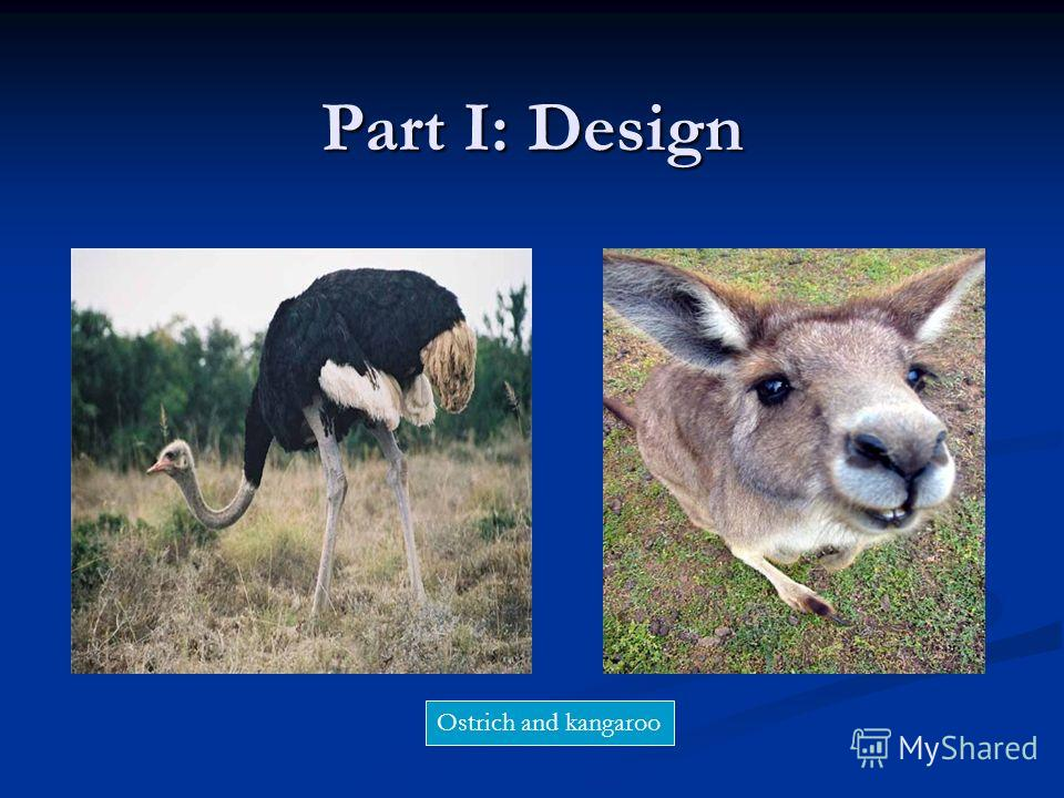 Part I: Design Ostrich and kangaroo