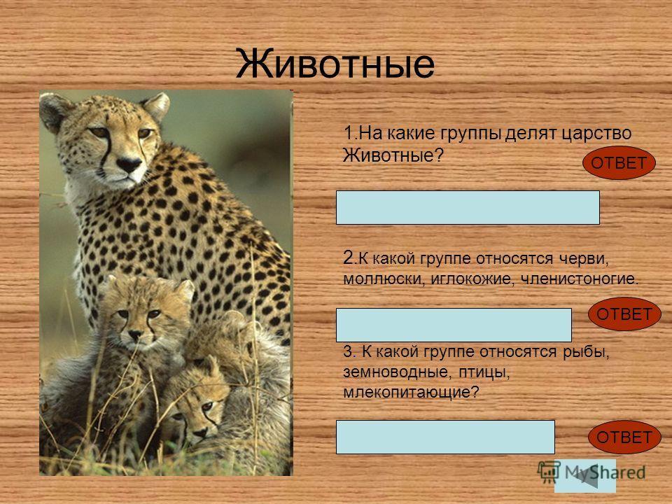 Животные 1.На какие группы делят царство Животные? Беспозвоночные и позвоночные 2.К какой группе относятся черви, моллюски, иглокожие, членистоногие. Беспозвоночные 3. К какой группе относятся рыбы, земноводные, птицы, млекопитающие? Позвоночные ОТВЕ