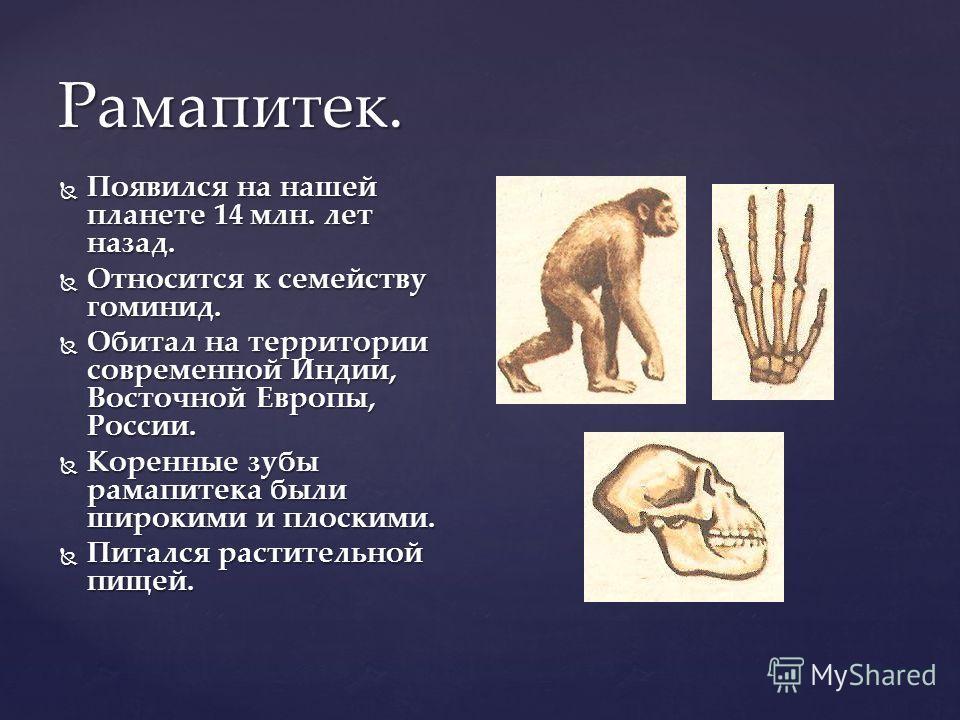 Рамапитек. Появился на нашей планете 14 млн. лет назад. Появился на нашей планете 14 млн. лет назад. Относится к семейству гоминид. Относится к семейству гоминид. Обитал на территории современной Индии, Восточной Европы, России. Обитал на территории