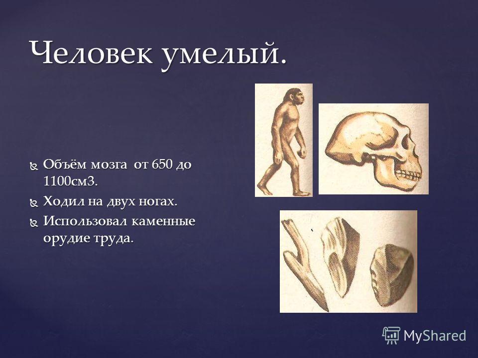 Человек умелый. Объём мозга от 650 до 1100см3. Объём мозга от 650 до 1100см3. Ходил на двух ногах. Ходил на двух ногах. Использовал каменные орудие труда. Использовал каменные орудие труда.
