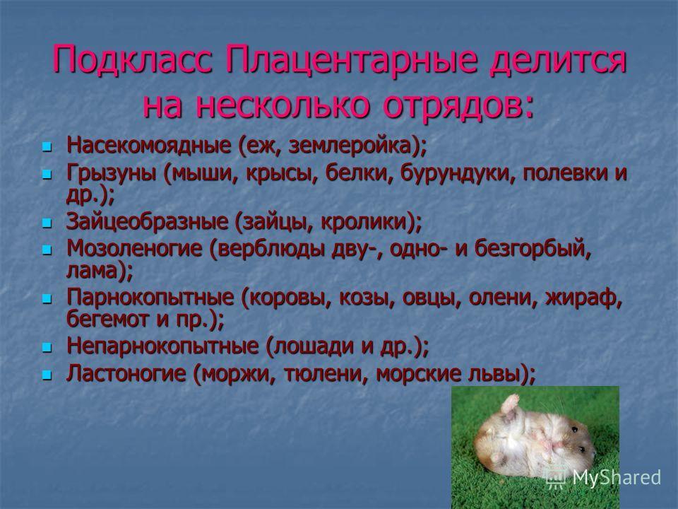 Подкласс Плацентарные делится на несколько отрядов: Насекомоядные (еж, землеройка); Насекомоядные (еж, землеройка); Грызуны (мыши, крысы, белки, бурундуки, полевки и др.); Грызуны (мыши, крысы, белки, бурундуки, полевки и др.); Зайцеобразные (зайцы,