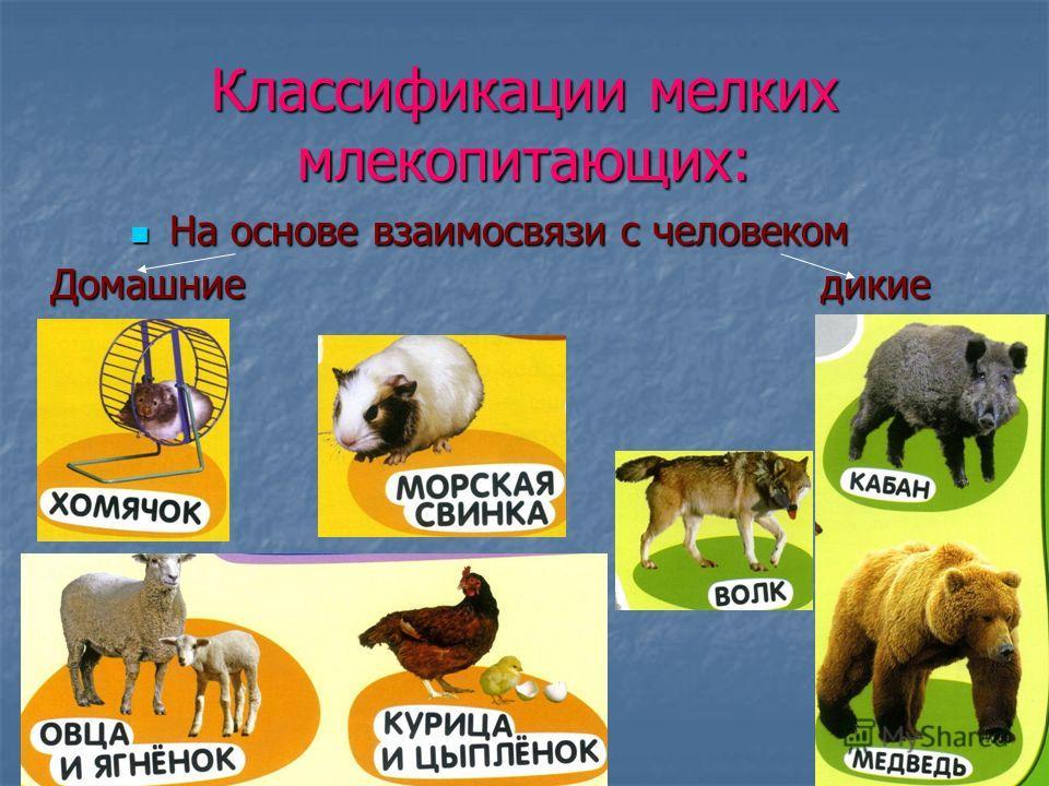Классификации мелких млекопитающих: На основе взаимосвязи с человеком На основе взаимосвязи с человеком Домашние дикие