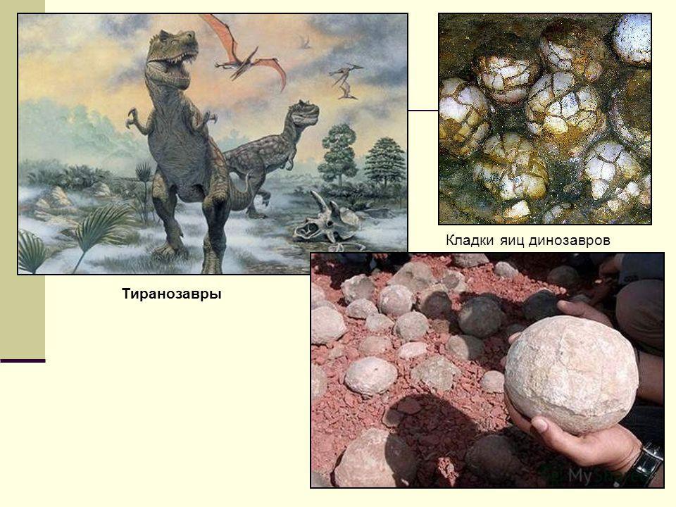 Кладки яиц динозавров Тиранозавры