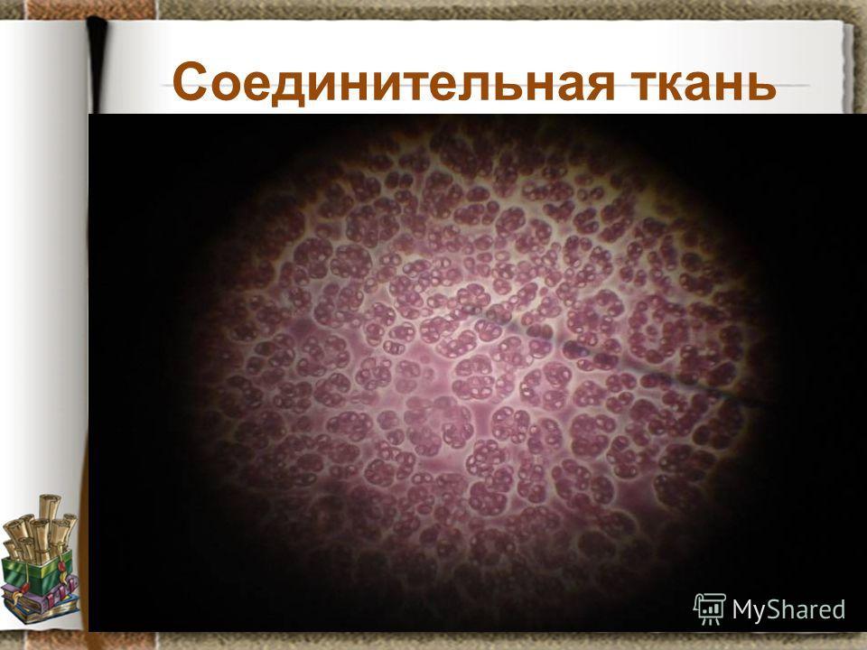 Соединительная ткань Задание: рассмотрите препарат крови лягушки, установите черты отличия от предыдущего препарата, предположите какие функции она может выполнять. Данные занесите в схему кластера.