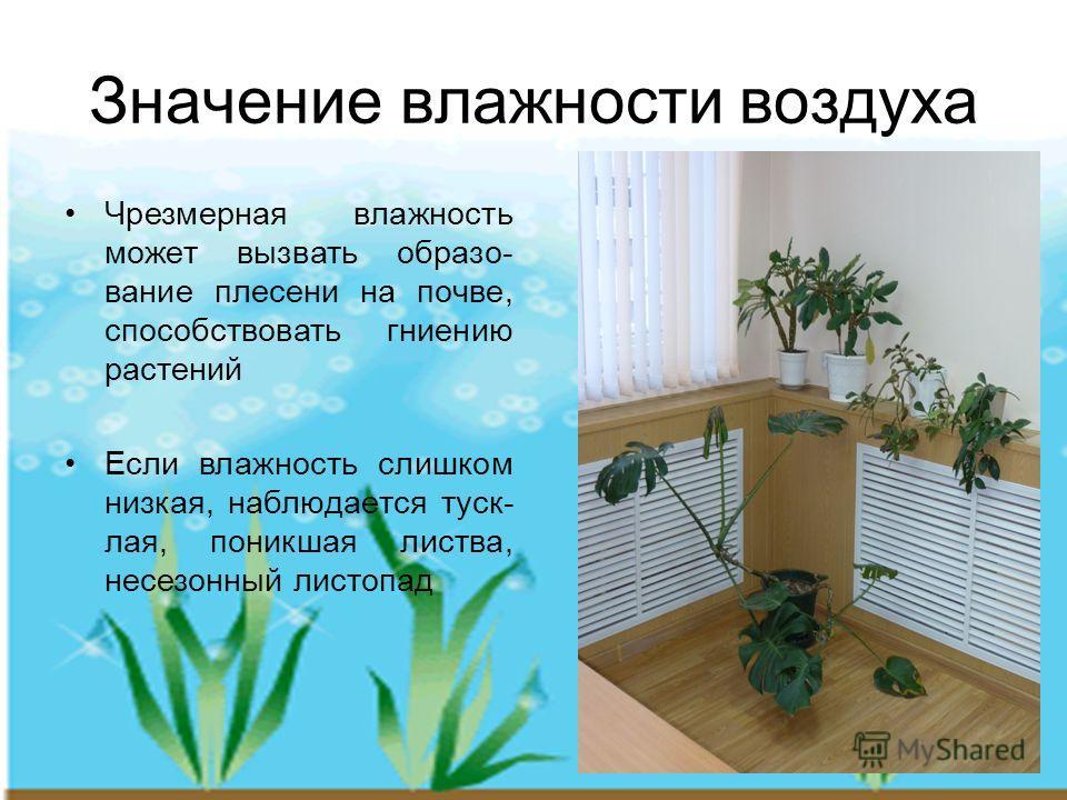 Значение влажности воздуха Чрезмерная влажность может вызвать образо- вание плесени на почве, способствовать гниению растений Если влажность слишком низкая, наблюдается туск- лая, поникшая листва, несезонный листопад