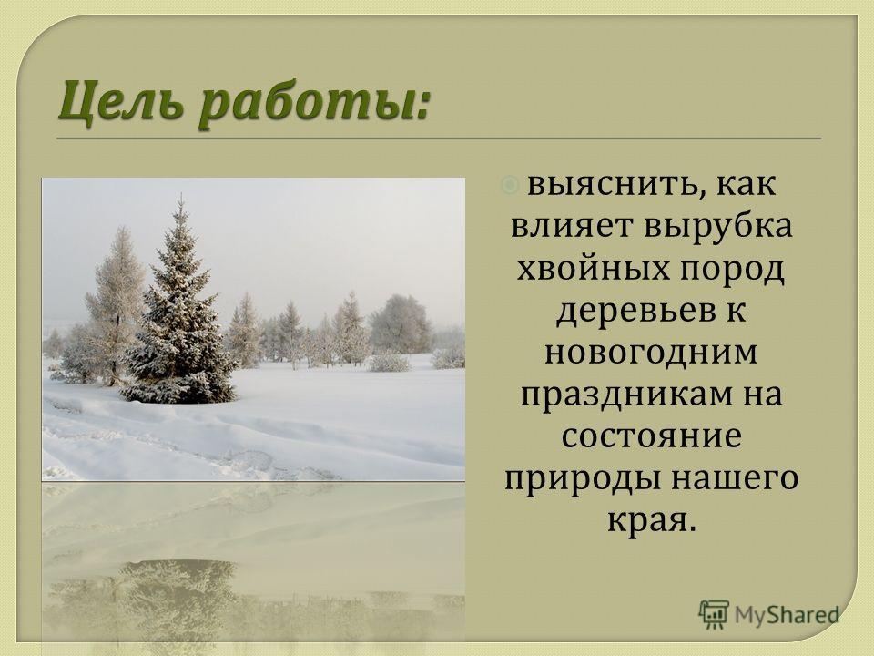 выяснить, как влияет вырубка хвойных пород деревьев к новогодним праздникам на состояние природы нашего края.