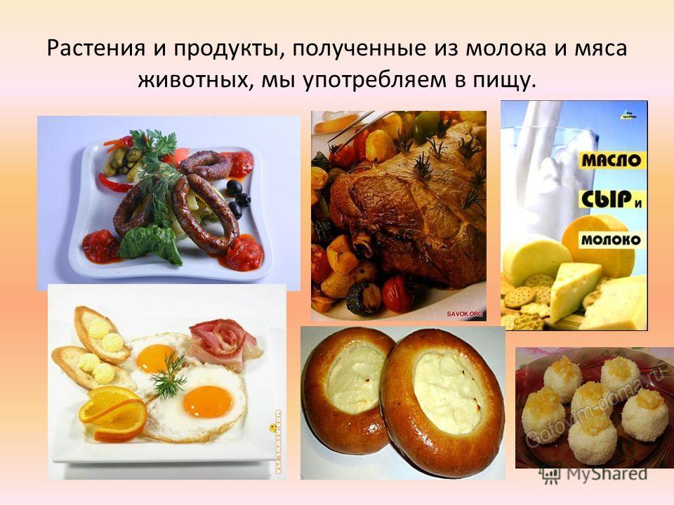 Растения и продукты, полученные из молока и мяса животных, мы употребляем в пищу.