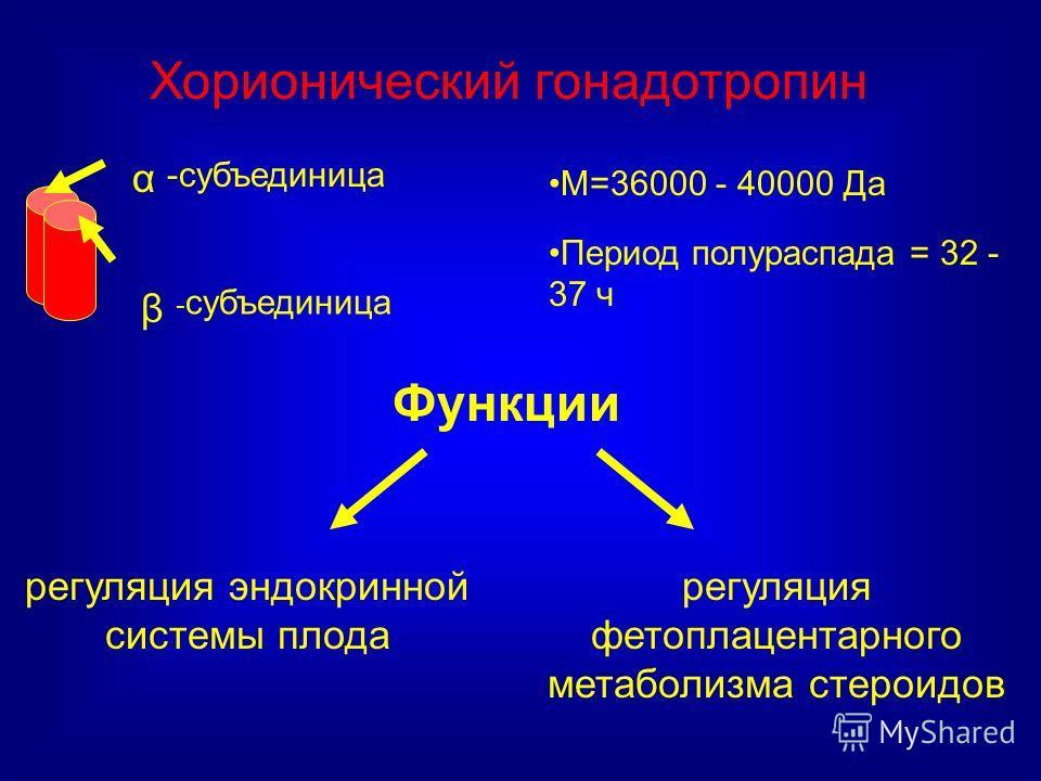 Функции М=36000 - 40000 Да Период полураспада = 32 - 37 ч Хорионический гонадотропин регуляция эндокринной системы плода регуляция фетоплацентарного метаболизма стероидов -субъединица α β