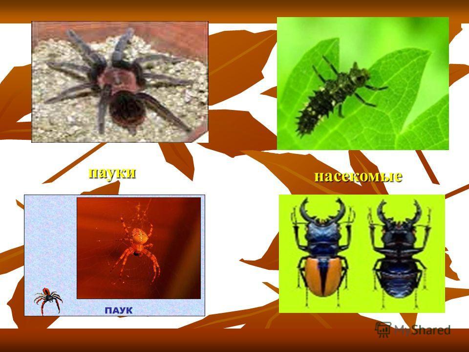 насекомые насекомые пауки