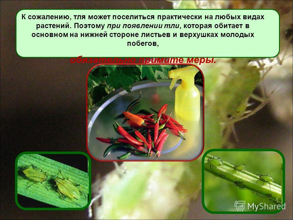 К сожалению, тля может поселиться практически на любых видах растений. Поэтому при появлении тли, которая обитает в основном на нижней стороне листьев и верхушках молодых побегов, обязательно примите меры.