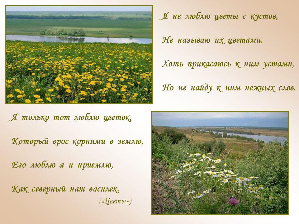 Я не люблю цветы с кустов, Не называю их цветами. Хоть прикасаюсь к ним устами, Но не найду к ним нежных слов. Я только тот люблю цветок, Который врос корнями в землю, Его люблю я и приемлю, Как северный наш василек. («Цветы»)