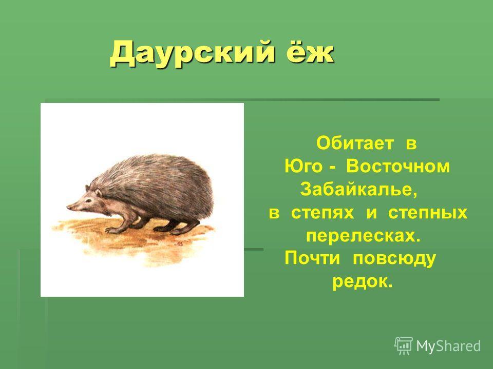 Даурский ёж Даурский ёж Обитает в Юго - Восточном Забайкалье, в степях и степных перелесках. Почти повсюду редок.