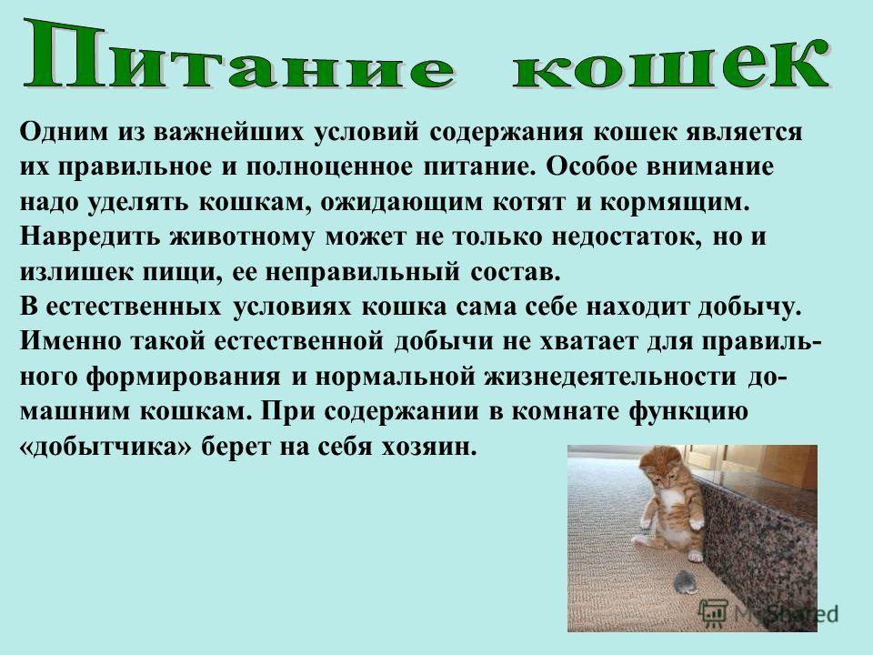 Одним из важнейших условий содержания кошек является их правильное и полноценное питание. Особое внимание надо уделять кошкам, ожидающим котят и кормящим. Навредить животному может не только недостаток, но и излишек пищи, ее неправильный состав. В ес