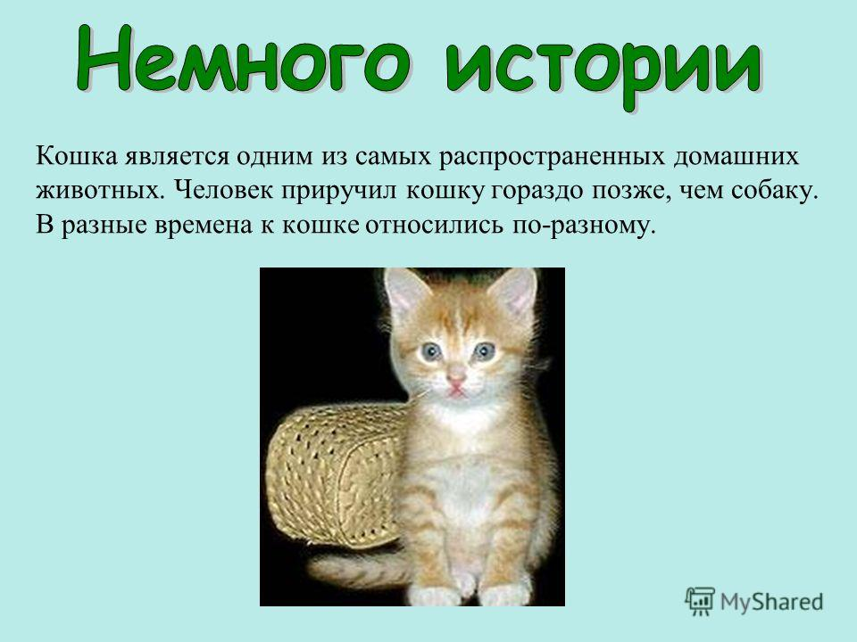 Кошка является одним из самых распространенных домашних животных. Человек приручил кошку гораздо позже, чем собаку. В разные времена к кошке относились по-разному.