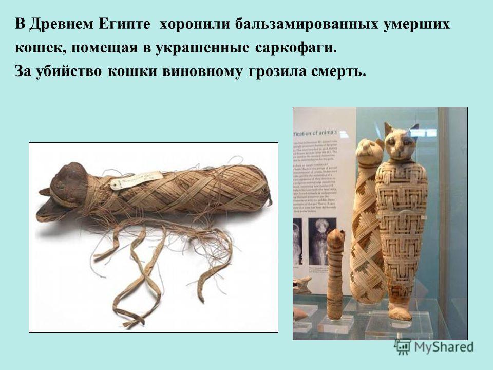 В Древнем Египте хоронили бальзамированных умерших кошек, помещая в украшенные саркофаги. За убийство кошки виновному грозила смерть.