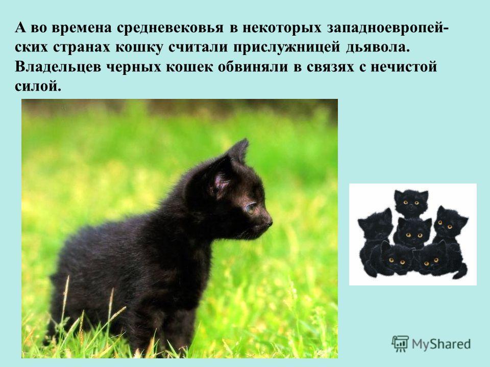А во времена средневековья в некоторых западноевропей- ских странах кошку считали прислужницей дьявола. Владельцев черных кошек обвиняли в связях с нечистой силой.