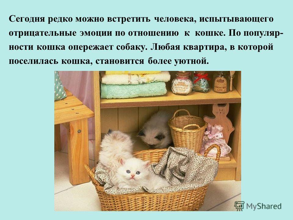 Сегодня редко можно встретить человека, испытывающего отрицательные эмоции по отношению к кошке. По популяр- ности кошка опережает собаку. Любая квартира, в которой поселилась кошка, становится более уютной.