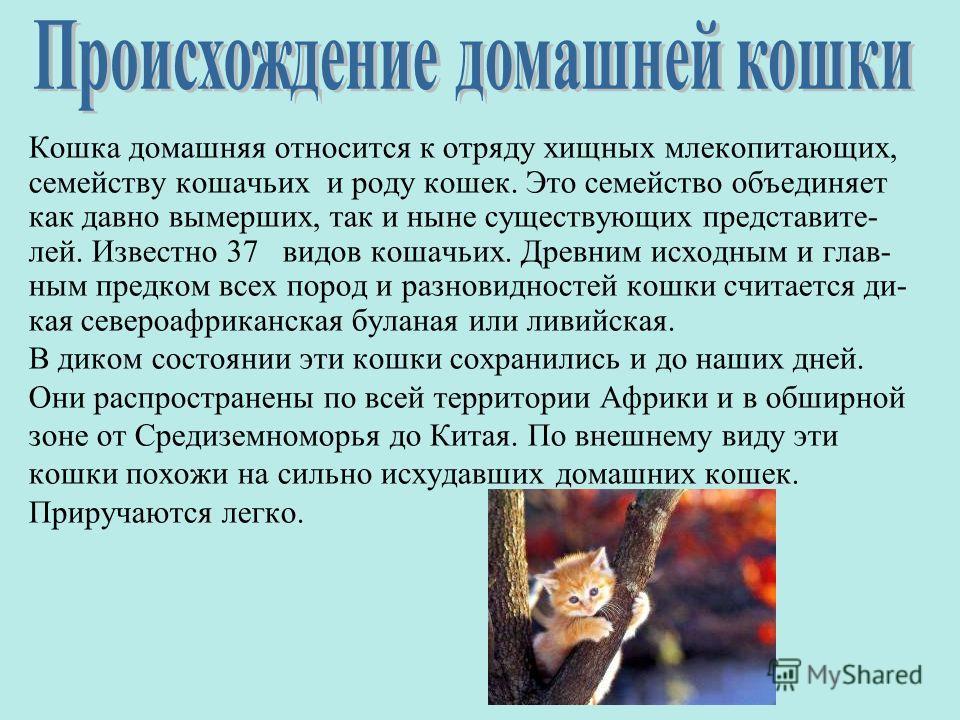 Кошка домашняя относится к отряду хищных млекопитающих, семейству кошачьих и роду кошек. Это семейство объединяет как давно вымерших, так и ныне существующих представите- лей. Известно 37 видов кошачьих. Древним исходным и глав- ным предком всех поро