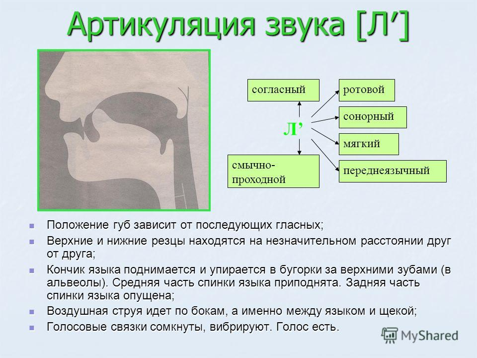 Артикуляция звука [Л] Положение губ зависит от последующих гласных; Положение губ зависит от последующих гласных; Верхние и нижние резцы находятся на незначительном расстоянии друг от друга; Верхние и нижние резцы находятся на незначительном расстоян