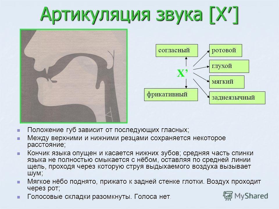 Артикуляция звука [Х] Положение губ зависит от последующих гласных; Положение губ зависит от последующих гласных; Между верхними и нижними резцами сохраняется некоторое расстояние; Между верхними и нижними резцами сохраняется некоторое расстояние; Ко