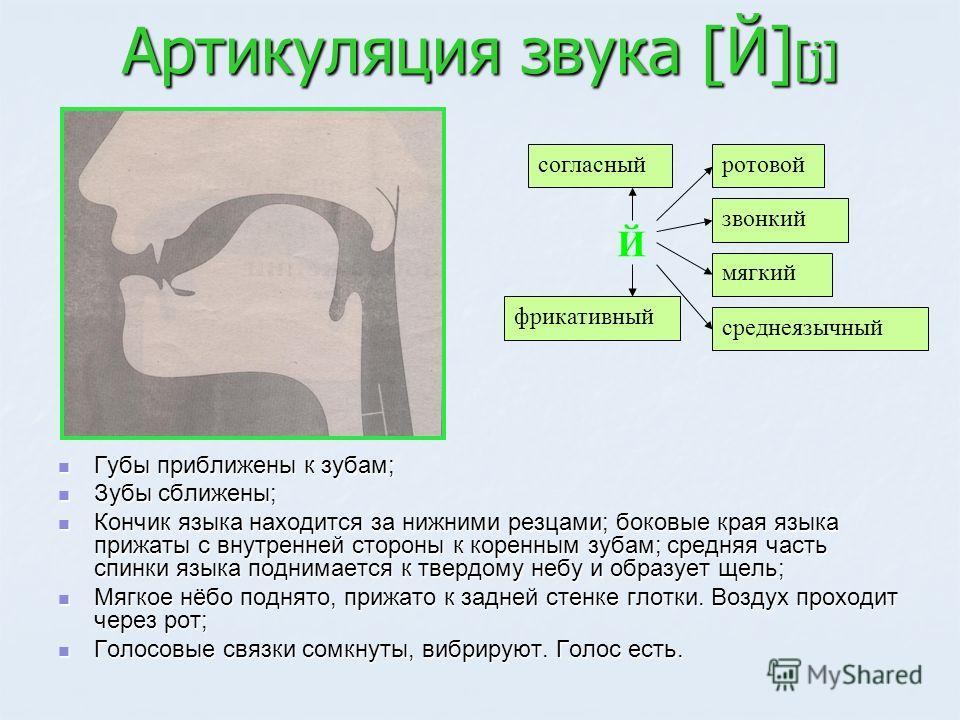 Артикуляция звука [Й] [j] Губы приближены к зубам; Губы приближены к зубам; Зубы сближены; Зубы сближены; Кончик языка находится за нижними резцами; боковые края языка прижаты с внутренней стороны к коренным зубам; средняя часть спинки языка поднимае