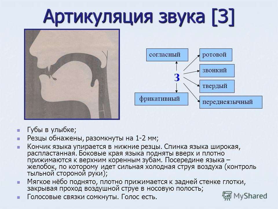 Артикуляция звука [З] Губы в улыбке; Губы в улыбке; Резцы обнажены, разомкнуты на 1-2 мм; Резцы обнажены, разомкнуты на 1-2 мм; Кончик языка упирается в нижние резцы. Спинка языка широкая, распластанная. Боковые края языка подняты вверх и плотно приж