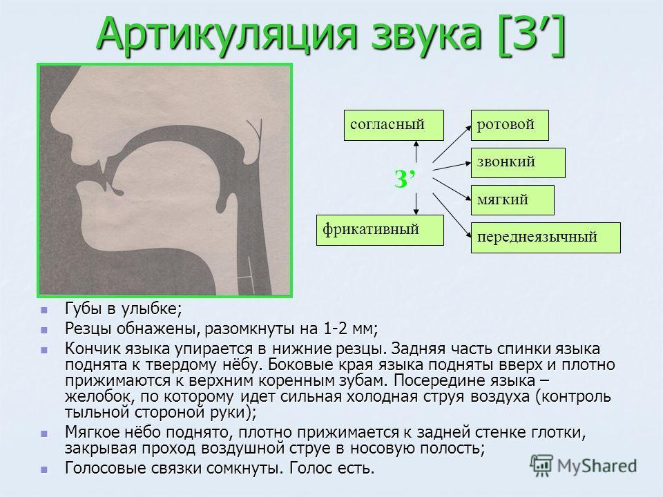Артикуляция звука [З] Губы в улыбке; Губы в улыбке; Резцы обнажены, разомкнуты на 1-2 мм; Резцы обнажены, разомкнуты на 1-2 мм; Кончик языка упирается в нижние резцы. Задняя часть спинки языка поднята к твердому нёбу. Боковые края языка подняты вверх