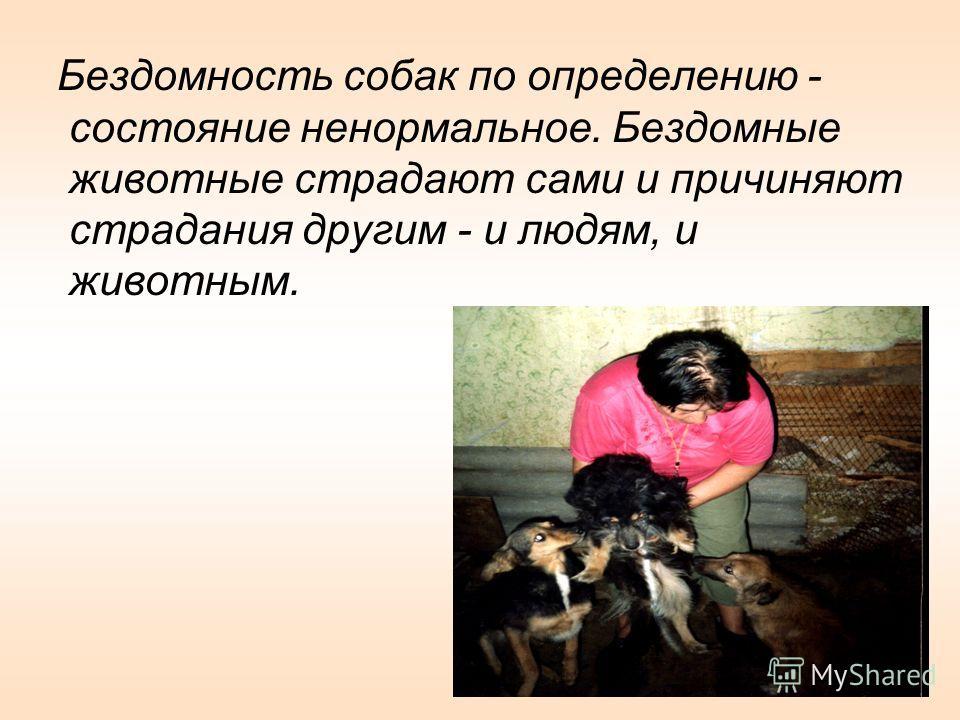 Бездомность собак по определению - состояние ненормальное. Бездомные животные страдают сами и причиняют страдания другим - и людям, и животным.