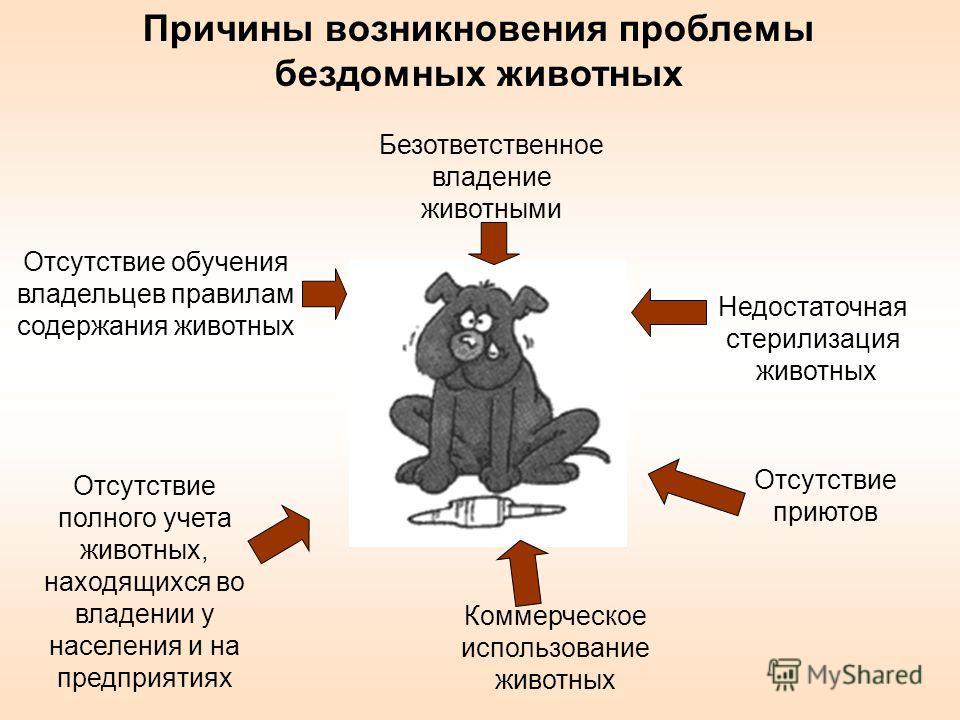 Безответственное владение животными Отсутствие обучения владельцев правилам содержания животных Недостаточная стерилизация животных Отсутствие приютов Коммерческое использование животных Отсутствие полного учета животных, находящихся во владении у на
