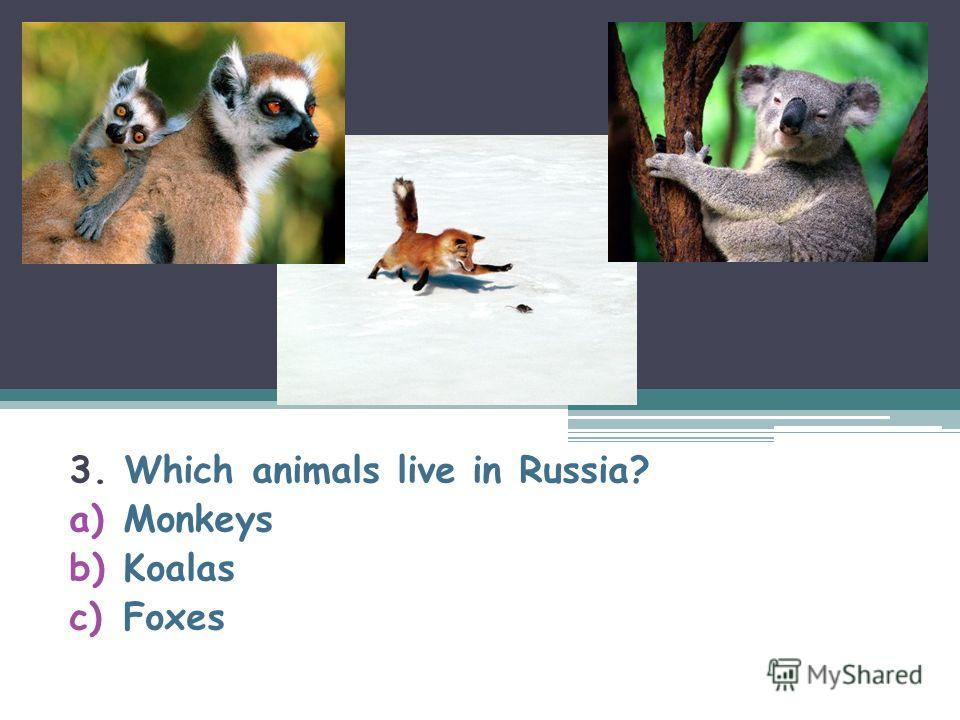 3. Which animals live in Russia? a)Monkeys b)Koalas c)Foxes