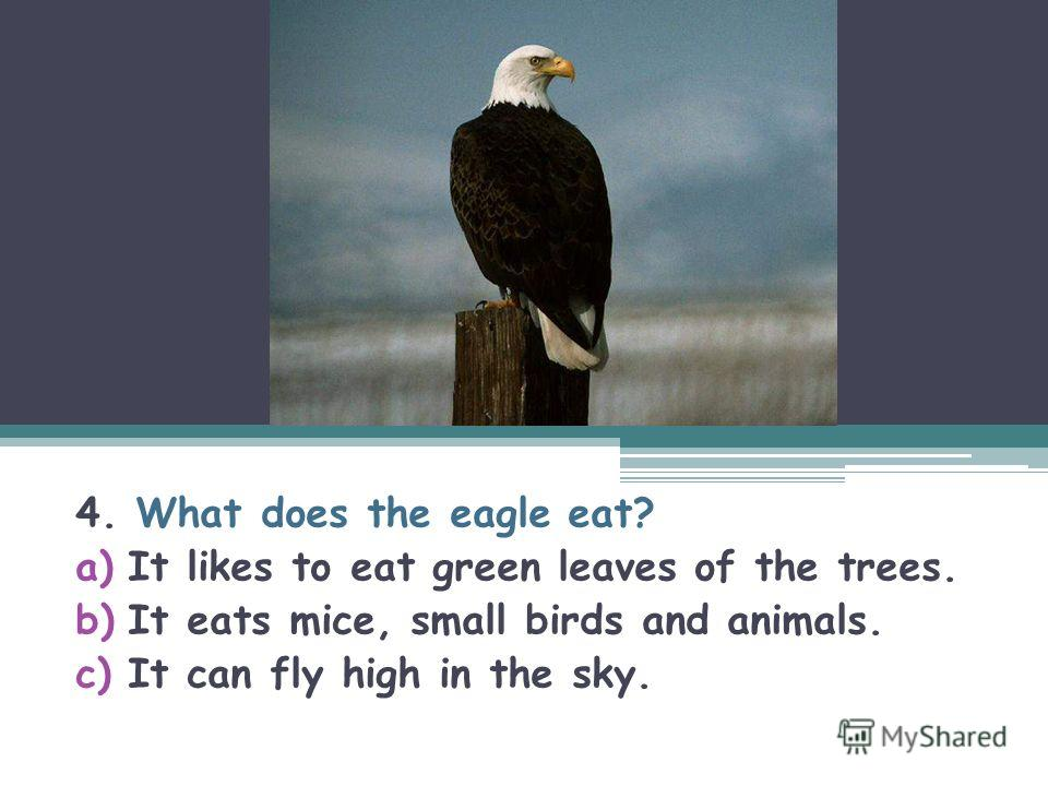 4. What does the eagle eat? a)It likes to eat green leaves of the trees. b)It eats mice, small birds and animals. c)It can fly high in the sky.