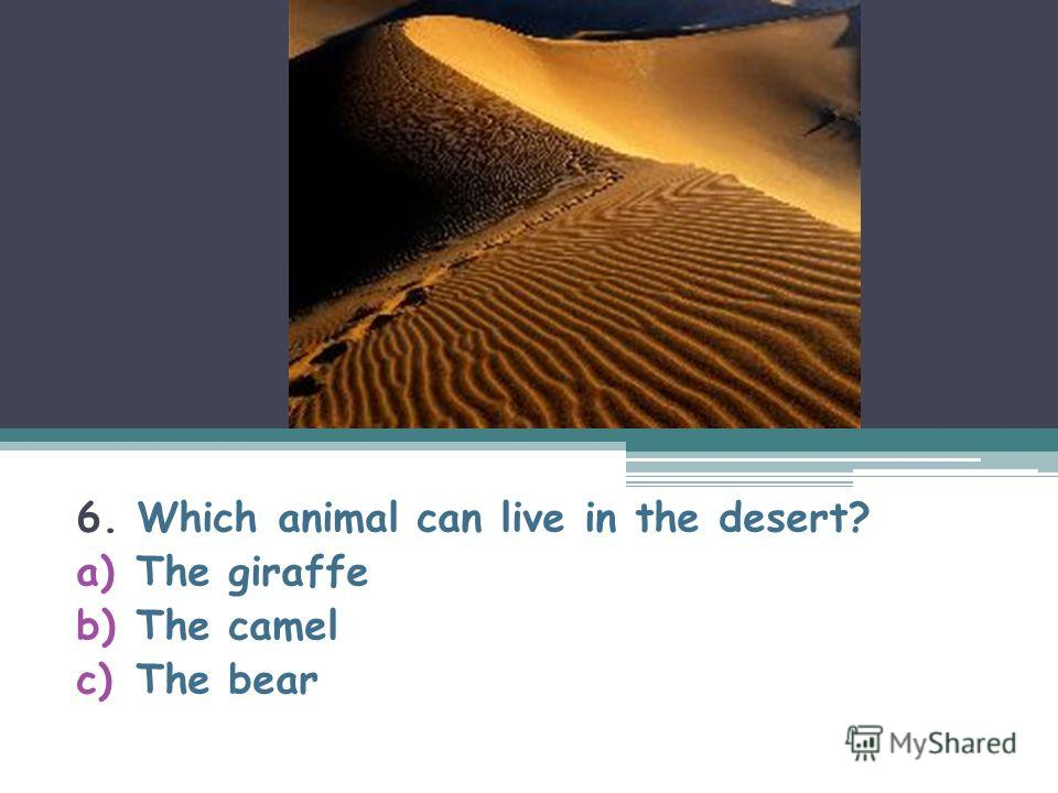 6. Which animal can live in the desert? a)The giraffe b)The camel c)The bear