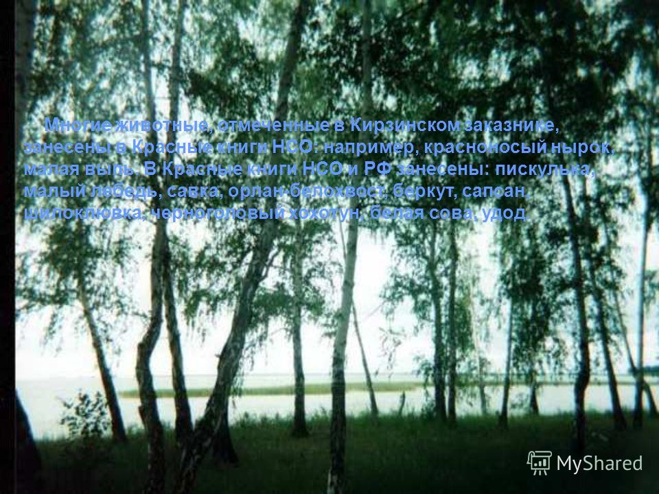 Многие животные, отмеченные в Кирзинском заказнике, занесены в Красные книги НСО: например, красноносый нырок, малая выпь. В Красные книги НСО и РФ занесены: пискулька, малый лебедь, савка, орлан-белохвост, беркут, сапсан, шилоклювка, черноголовый хо