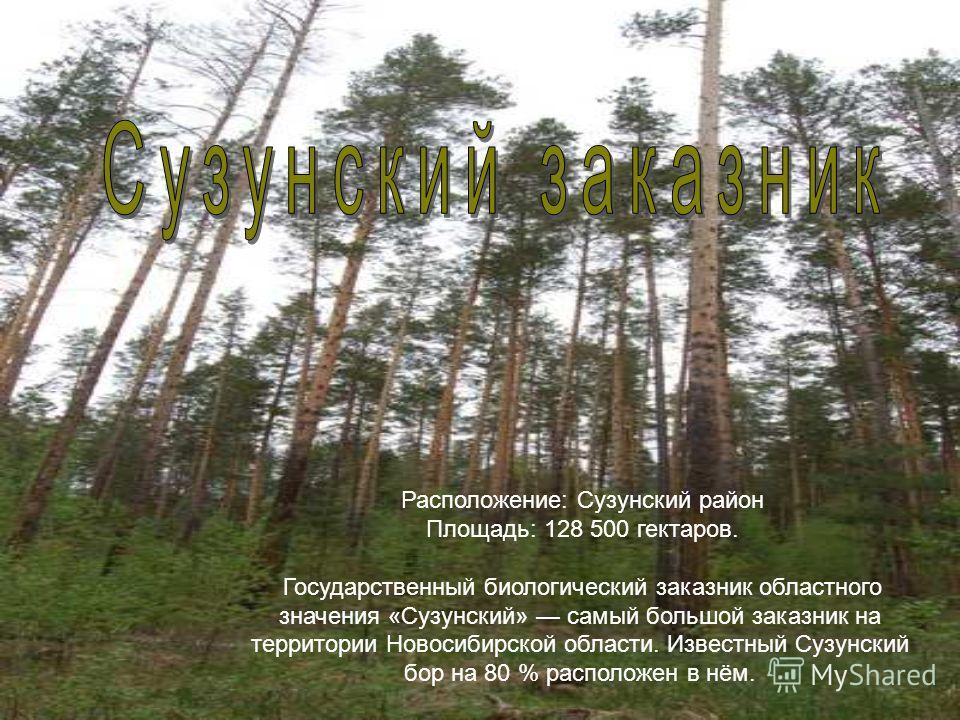 Расположение: Сузунский район Площадь: 128 500 гектаров. Государственный биологический заказник областного значения «Сузунский» самый большой заказник на территории Новосибирской области. Известный Сузунский бор на 80 % расположен в нём.