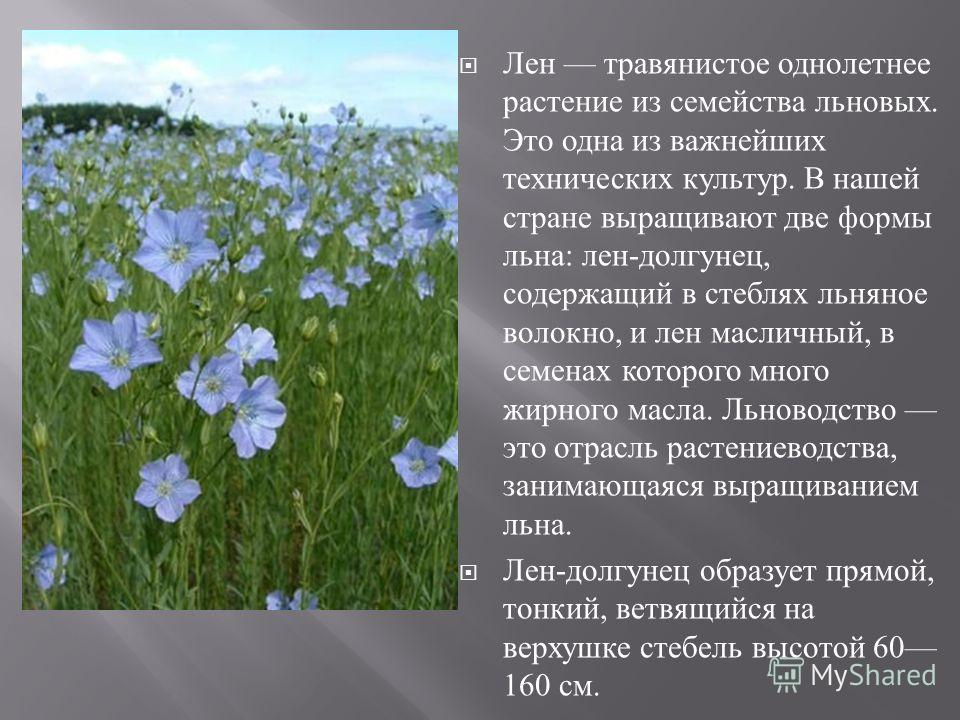 Лен травянистое однолетнее растение из семейства льновых. Это одна из важнейших технических культур. В нашей стране выращивают две формы льна : лен - долгунец, содержащий в стеблях льняное волокно, и лен масличный, в семенах которого много жирного ма